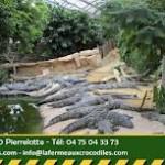 the crocodiles farm