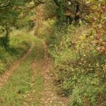 chemin rando Rochegude